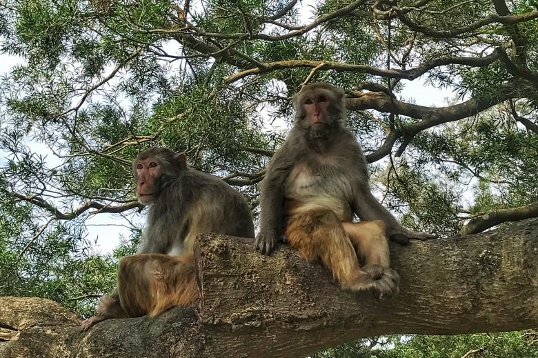monkeys - Copy.jpg
