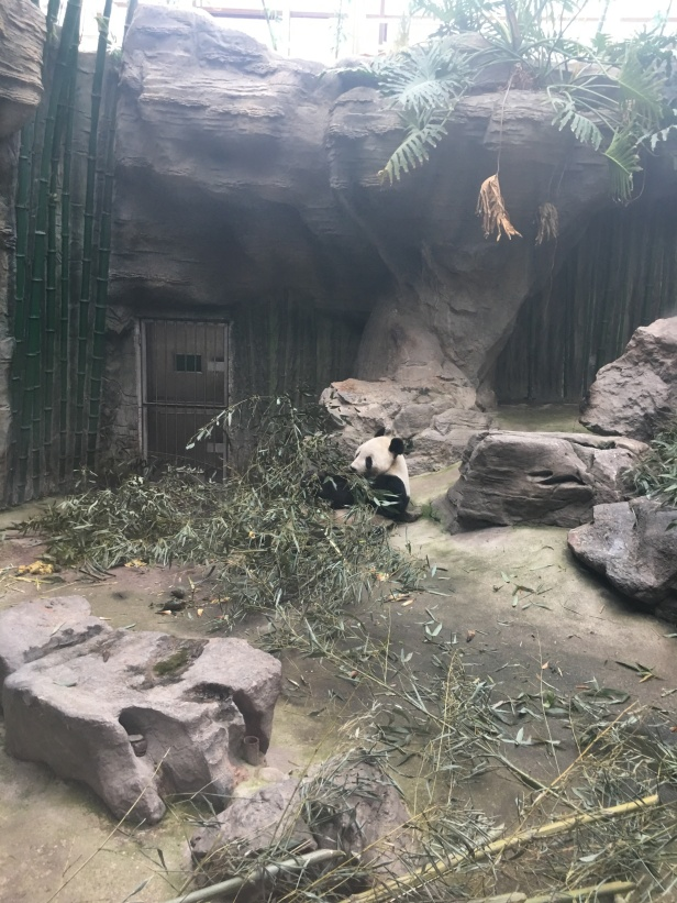 panda-eating-1.jpg
